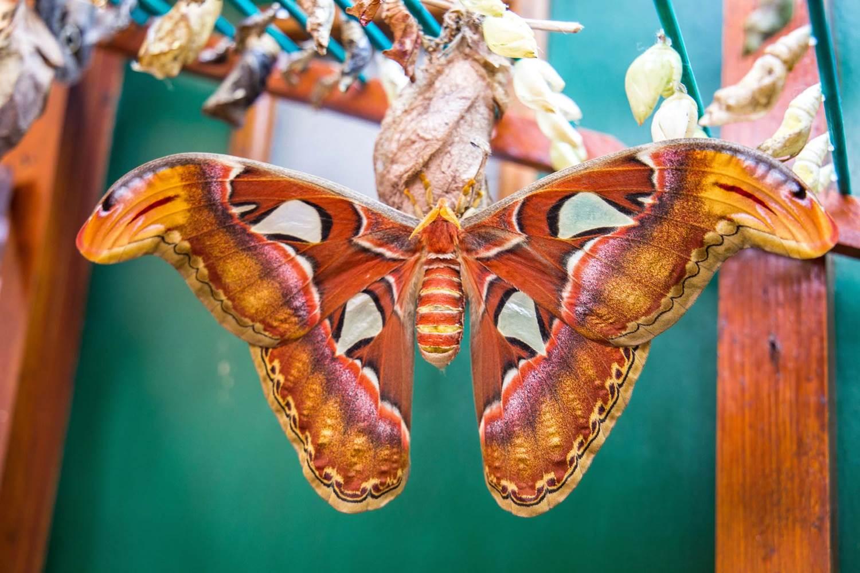 jardin-aux-papillons-morbihan-bretagne-sud-22 © © Magalie BARRE