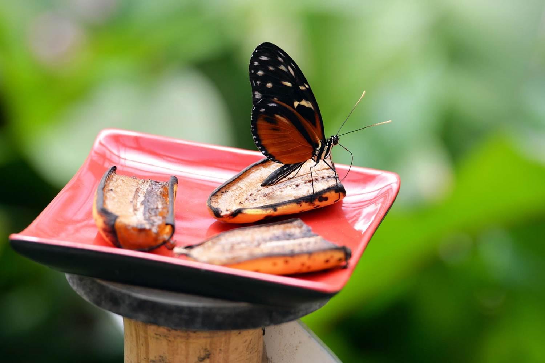 jardin-aux-papillons-morbihan-bretagne-sud-12 © Michel RENAC