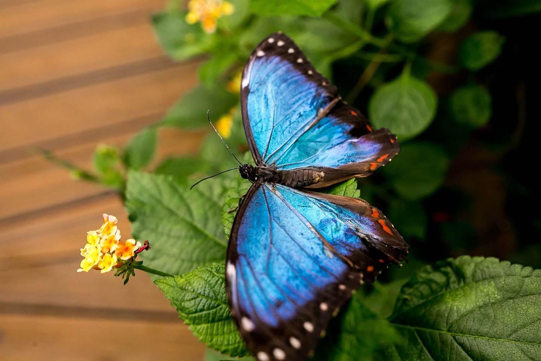 jardin-aux-papillons-morbihan-bretagne-sud-42 © Meero