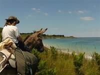 Location d'ânes de randonnée : Ile Ane