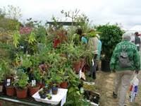 Vide jardin à Camors