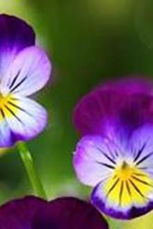 Atelier plantes sauvages et cultivées : les