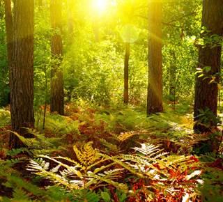 Séjour nature et culture magique en Brocéliande