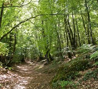 Forêt domaniale de Camors, Floranges, Lanvaux
