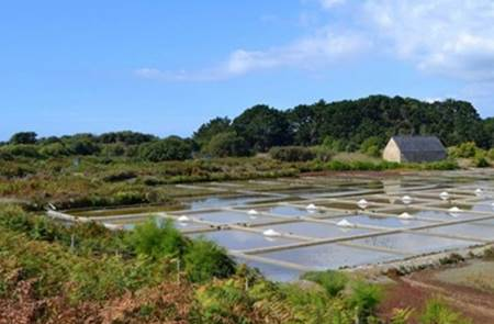 Découverte des salines trinitaines - La Trinité-sur-Mer
